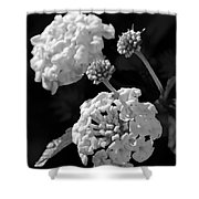 Lantana In Black And White Shower Curtain