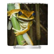 Large Arboreal Hylid Frog Shower Curtain