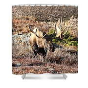 Large Bull Moose Shower Curtain