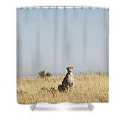 Large Female Cheetah Shower Curtain