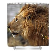 Large Male Lion Emerging From The Bush Shower Curtain