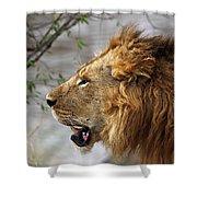 Large Male Lion Profile Portrait Shower Curtain