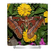 Large Moth Shower Curtain