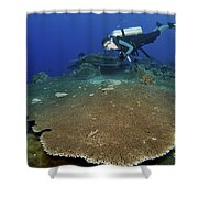 Large Staghorn Coral And Scuba Diver Shower Curtain