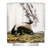 Large Tailed Skunk Shower Curtain