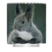 Large Tufted Ears Grace An Shower Curtain