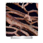 Large Whip Goby And Pygmy Seahorse Shower Curtain