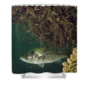 Largemouth Bass Shower Curtain