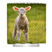 Larry Lamb And His Lovely Pink Ears. Shower Curtain