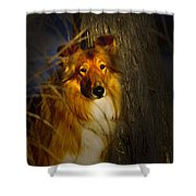 Lassie Lookalike Shower Curtain