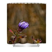 Last Aster Shower Curtain
