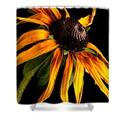Last Day Of A Black-eyed Susan Shower Curtain