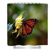 Last Kiss Of The Butterfly Shower Curtain