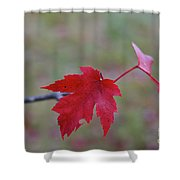 Last Leaves Shower Curtain