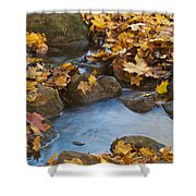 Last Signs Of Autumn 0438 Shower Curtain