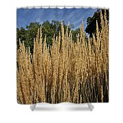 Late Summer Colors Shower Curtain