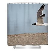 Laughing Gull In Flight Shower Curtain