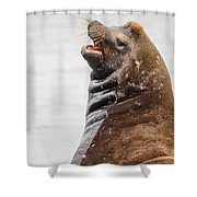 Laughing Sea Lion Shower Curtain