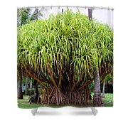 Lauhala Tree Shower Curtain