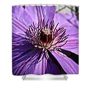 Lavender Clematis Shower Curtain
