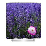 Lavender Field With Poppy Shower Curtain