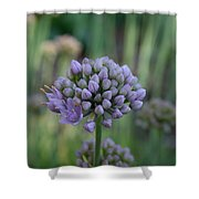 Lavender Flowering Onion Shower Curtain