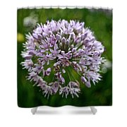 Lavender Globe Lily Shower Curtain