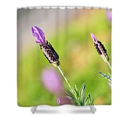 Lavender In The Sun Shower Curtain