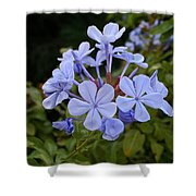 Leadwort Shower Curtain