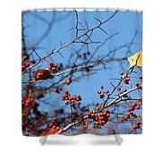 Leaf Among Thorns Shower Curtain