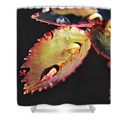 Leaf And Dew Drops Shower Curtain
