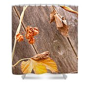 Leaf And Old Wood Fence Shower Curtain