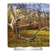 Leaf Barren White Tree Trunk In California No.1500 Shower Curtain