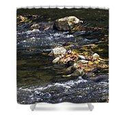 Leaf Collection Shower Curtain