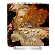 Leaf Doplets Shower Curtain by LeeAnn McLaneGoetz McLaneGoetzStudioLLCcom