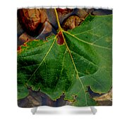 Leaf In The River Shower Curtain