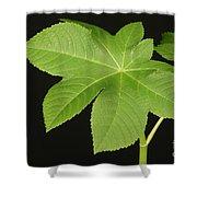Leaf Of Castor Bean Plant Shower Curtain