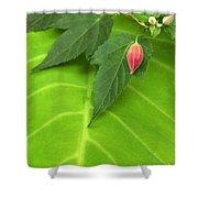 Leaf On Leaf With Red Bud Shower Curtain