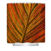 Leaf Pattern Abstract Shower Curtain