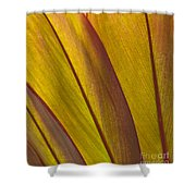 Leaf Patterns Shower Curtain