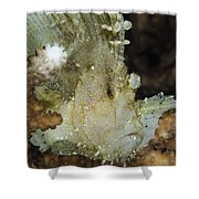Leaf Scorpionfish, Indonesia Shower Curtain