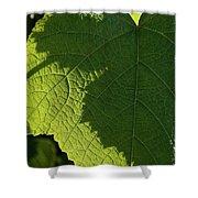 Leaf Shadow Shower Curtain