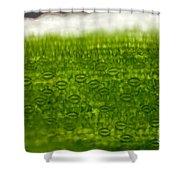 Leaf Stomata, Lm Shower Curtain