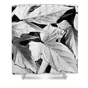 Leaf Study In Black And White Shower Curtain