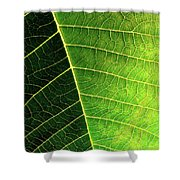 Leaf Texture Shower Curtain by Carlos Caetano