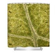 Leaf Vascularization Shower Curtain
