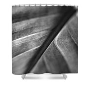 Leaf Venation   Shower Curtain