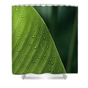 Leaf With Water Drops, Barro Colorado Shower Curtain