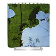 Leafcutter Ant Atta Columbica Workers Shower Curtain