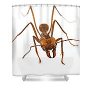 Leafcutter Ant Worker Costa Rica Shower Curtain